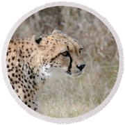 Round Beach Towel featuring the photograph Spotted Beauty 2 by Fraida Gutovich