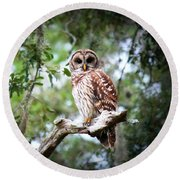 Spotted Owl II Round Beach Towel
