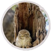 Spotted Owlet Round Beach Towel