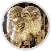 Spotted Owlets Round Beach Towel