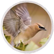 Spread Your Wings Cedar Waxwing  Round Beach Towel