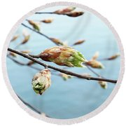 Spring At The Lake Round Beach Towel