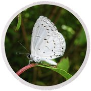 Spring Azure Butterfly Round Beach Towel by Donna Brown