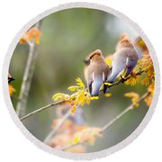 Round Beach Towel featuring the photograph Spring Beauties  by Parker Cunningham