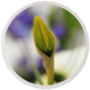 Round Beach Towel featuring the photograph Spring Blooms In The Snow by Chris Berry