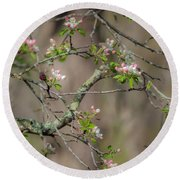 Spring Blossoms 2 Round Beach Towel
