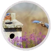 Round Beach Towel featuring the photograph Spring Builders by Lori Deiter