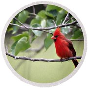 Round Beach Towel featuring the photograph Spring Cardinal by Lana Trussell