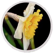 Round Beach Towel featuring the photograph Spring Daffodil Flower by Jennie Marie Schell