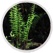 Round Beach Towel featuring the photograph Spring Ferns by Skip Willits