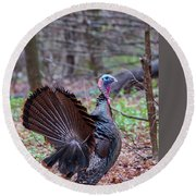 Round Beach Towel featuring the photograph Spring Gobbler by Bill Wakeley