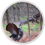 Round Beach Towel featuring the photograph Spring Gobbler Square by Bill Wakeley