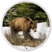 Spring Grizzly Round Beach Towel