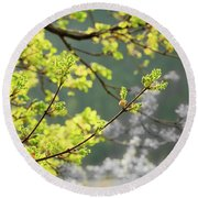 Spring In The Arboretum Round Beach Towel