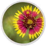 Spring Indian Blanket Round Beach Towel