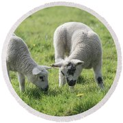 Round Beach Towel featuring the photograph Spring Lambs by Scott Carruthers