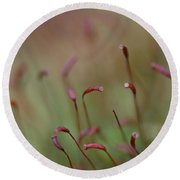 Spring Macro5 Round Beach Towel by Jeff Burgess