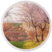 Round Beach Towel featuring the photograph Spring Orchard With Morring Sun by Jenny Rainbow