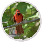 Spring Training Cardinal Round Beach Towel