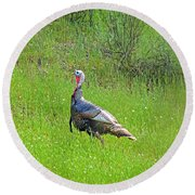Spring Turkey Gobbler Round Beach Towel