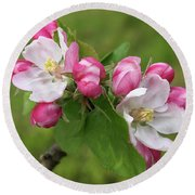 Springtime Apple Blossom Round Beach Towel by Gill Billington