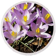 Springtime Crocuses  Round Beach Towel