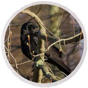 Round Beach Towel featuring the photograph Springtime Crow by Bill Wakeley