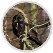Round Beach Towel featuring the photograph Springtime Crow Square by Bill Wakeley