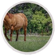 Round Beach Towel featuring the photograph Springtime In Texas Fields by Elaine Malott
