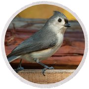 Springtime Tufted Titmouse Round Beach Towel
