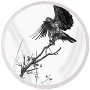Squaw Creek Red-tail Round Beach Towel
