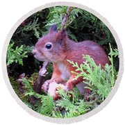 Squirrel 3 Round Beach Towel