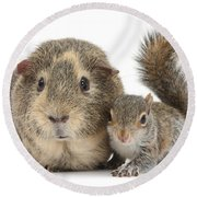 Squirrel And Guinea Round Beach Towel