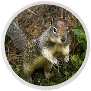 Squirrel At Moonstone Beach, California 001 Round Beach Towel