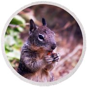 Squirrel At Moonstone Beach, California 003 Round Beach Towel
