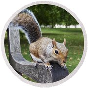Squirrel Bench Round Beach Towel