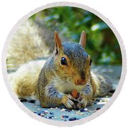 Squirrel Closeup Round Beach Towel