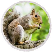 Squirrel Eating On A Branch Round Beach Towel
