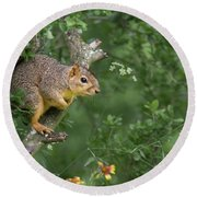Squirrel In A Tree Round Beach Towel
