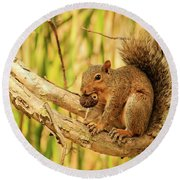 Squirrel In A Tree In The Marsh Round Beach Towel