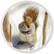 Squirrel In Snow Round Beach Towel