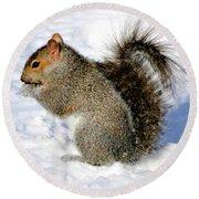Squirrel In Winter Round Beach Towel