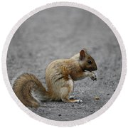 Squirrel Round Beach Towel