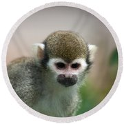 Squirrel Monkey Round Beach Towel by Amanda Elwell
