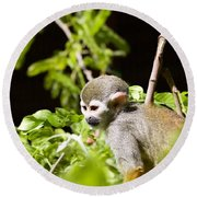 Squirrel Monkey Youngster Round Beach Towel