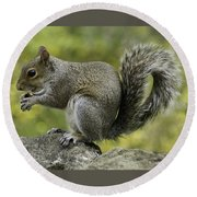 Squirrel, On The Hop Round Beach Towel