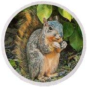 Squirrel Under Bush Round Beach Towel