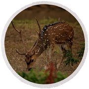 Sri Lankan Axis Deer Round Beach Towel