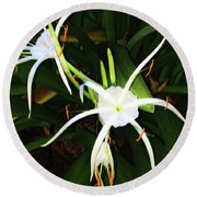 St. A S Spider Flower Couple Round Beach Towel by Daniel Hebard