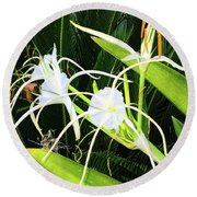 St. Aandrews Spider Flower Family Round Beach Towel by Daniel Hebard